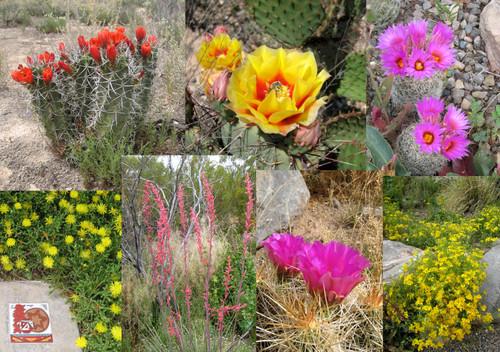 H.  Desert Flowers