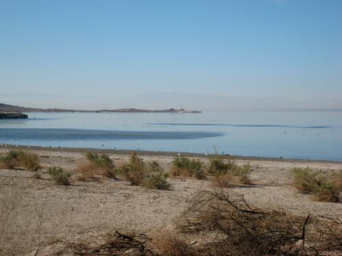 Salton Seashore