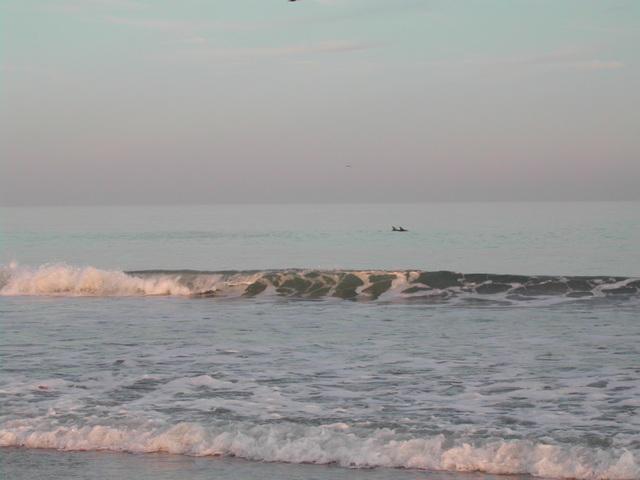Myrtle Beach Dolphins