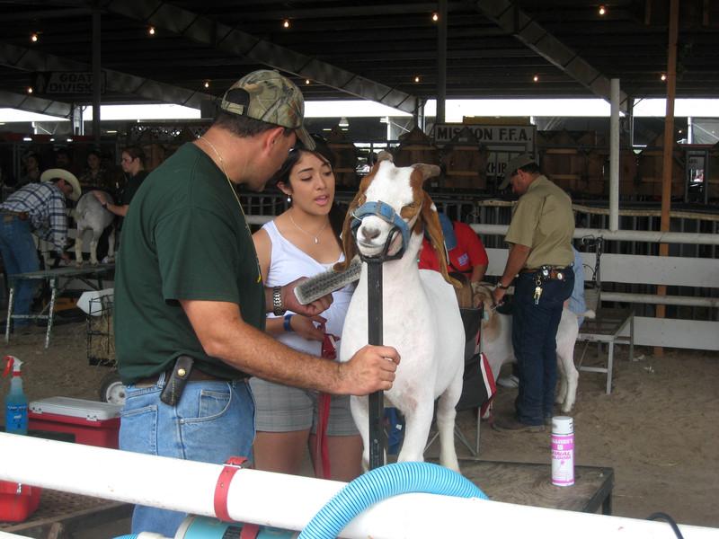 Livestock_show_4_copy