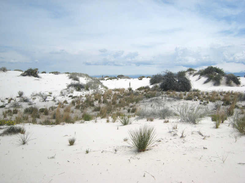 White_sands011_copy