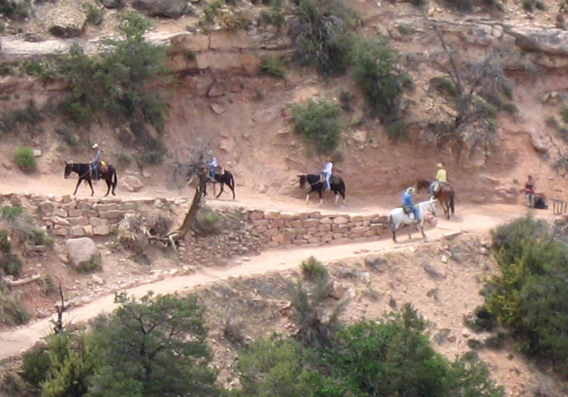 Bright_angel_trail_mules_2