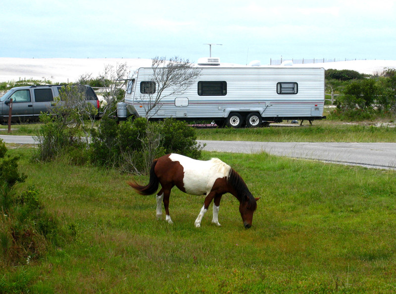 Assateague_chesapeak_140_copy