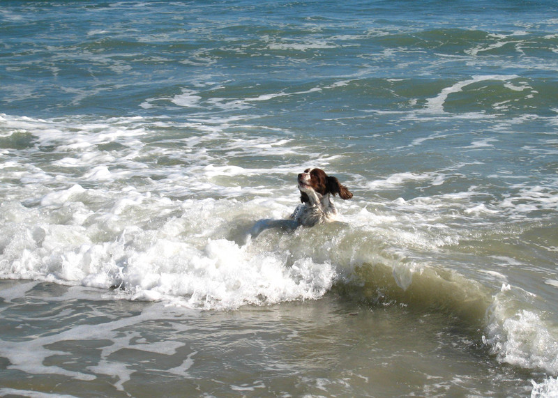 Myrtle_beach_2007_19_copy