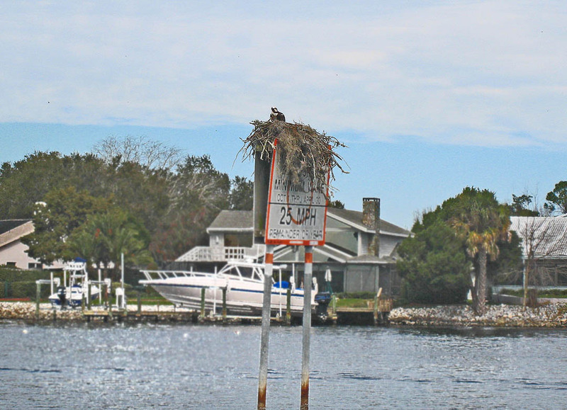 Airboat011_3
