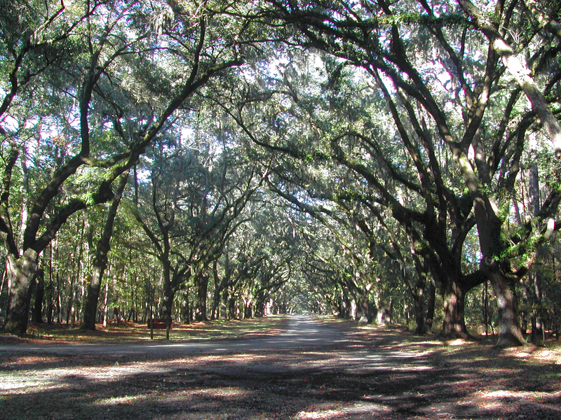 Savannah042_copy